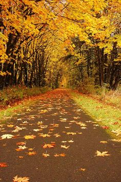 Some parts of the Banks Vernonia Trail were like tunnels because of the trees overhanging the trail. Autumn Day, Hello Autumn, Autumn Leaves, All Nature, Autumn Nature, Nature Tree, Autumn Scenes, Autumn Aesthetic, Fall Pictures