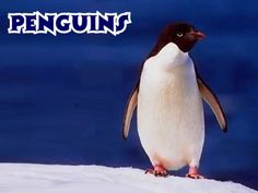 Google Image Result for http://www.kidzone.ws/imageschanged/penguins/menu.jpg      penguins rule