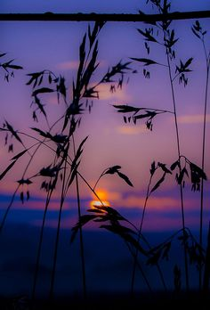 Sunset means there's also a beautiful ending Beautiful Landscape Wallpaper, Beautiful Landscapes, Sunset Wallpaper, Wallpaper Backgrounds, Sunset Photography, Landscape Photography, Nature Pictures, Beautiful Pictures, Silhouette Photography