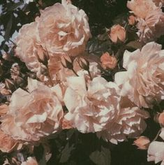flowers pink hazy faded nature photography natural aesthetic landscape trees plants preserved beautiful artistic g e o r g i a n a : p h o t o g r a p h y Spring Aesthetic, Plant Aesthetic, Nature Aesthetic, Flower Aesthetic, Aesthetic Vintage, Aesthetic Anime, Aesthetic Grunge, Aesthetic Pastel, Aesthetic Drawing