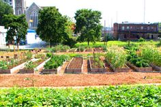 Urban Ag Policies in Major US Cities