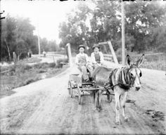 Mule pulling flatbed wagon, two men as passengers. Creator(s) Lillybridge, Charles S., 1849-1935. Outdoor portrait of men in a burro cart, by a wooden suspension bridge over Archer Canal, Denver, Colorado. Date [between 1904 and 1910?] Courtesy: Western History/Genealogy Department, Denver Public Library, Denver, Colorado (USA).