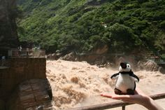 Jump of the Tiger waterfall on the Yangtze River. Belgium, Penguins, Waterfall, China, France, River, Animals, Animales, Animaux