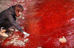 Polluted water in China caused by chemical plants.