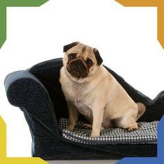 #PetsTip Si pasas mucho tiempo en casa, los Chihuahueños, Bulldog Francés, Lhasa Apso, Pekines, Greyhound, Pug y ShihTzu, son ideales para ti, les encanta pasar mucho tiempo en el sofá