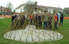 planting a large living willow dome