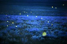 Fireflies in the Flint Hills of Kansas - Photo by JimRichardson