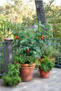 A list of what size pot to grow vegetables in... how helpful!...  - Bonnie Plants