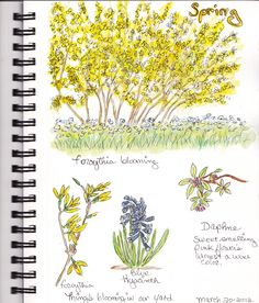 beautifullllll nature journal pages!