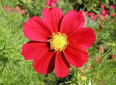 red flowers - Google Search