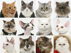 United Bamboo Expands Its Fashion Cats Empire