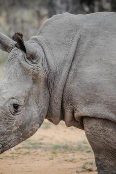 animal, africa, wilderness