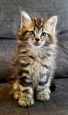 Cats And Kittens, Cute Cats, Pets, Animals, Pretty Cats, Animales, Animaux, Animal, Animais