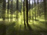 Forest Light Impression  Bavaria  Germany