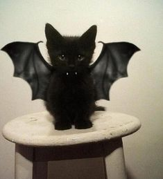 Vampire Kitten | The 60 Greatest Pet Costumes EVER | Halloween | Winston's…