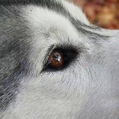 The Alpha Wolf