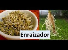 APRENDA A FAZER PÓ ENRAIZADOR TUNADO MELHOR QUE O VENDE NO MERCADO BRASILEIRO Sítio GilSat. - YouTube
