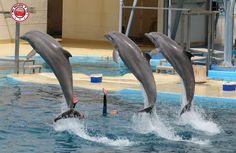 Delfines en Aquopolis de la Pineda Platja - Vila Seca #Tarragona #Spain