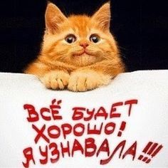 Фотография Quotes About God, New Quotes, Happy Quotes, Funny Animal Pictures, Funny Images, Funny Animals, Positive Thoughts, Positive Quotes, Morning Love Quotes