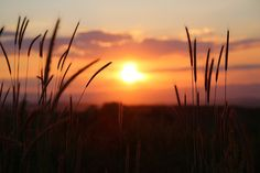 Free Image on Pixabay - Sunset, Nature, Evening, Grasses Landscape Photography Tips, Image Photography, Free Pictures, Free Images, Tumblr Bff, Sky Images, Sunset Images, Night Sky Stars, Vibe Video