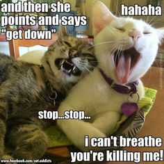 20 Cat Memes That Are 100% Funny - CutesyPooh