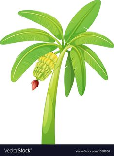 ideas banana tree clipart clip art for 2019