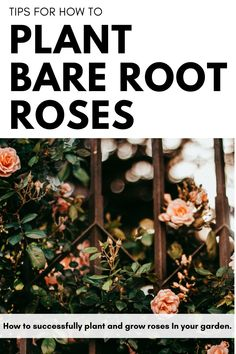 Tips on How to Plant Bare Root Roses in your own home garden. I share the different types of roses, how to plant them, and where to find them Types Of Roses, Home And Garden, Lifestyle, Tips, Plants, Baby, Decor, Decoration, Plant