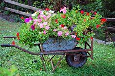 Bloemen in een kruiwagen