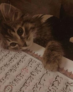 Cute Baby Cats, Cute Little Animals, Cute Cats And Kittens, I Love Cats, Crazy Cats, Kittens Cutest, Animals And Pets, Funny Animals, La Ilaha Illallah