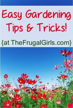 BIG List of Easy Gardening Tips and Tricks! ~ at TheFrugalGirls.com #gardening