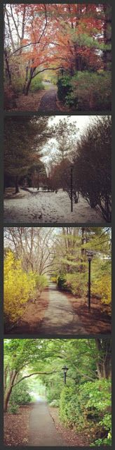 DIY Artwork Idea: Photograph the same scene each season. #DIY #Photography #Seasons