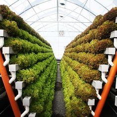 Inspiring Vertical Garden Ideas for Small Space 29 Vertical Farming, Space Gallery, Small Space Gardening, Hydroponics, Stepping Stones, Small Spaces, Garden Ideas, Outdoor Decor, Instagram Posts