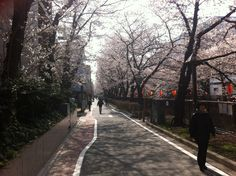 Another from Naka Meguro Station, Tokyo. Taken early April Cherry Blossom, Tokyo, Sidewalk, Real Estate, Japan, Tokyo Japan, Side Walkway, Real Estates, Walkway