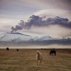 Icelandic Horses by Rebekka Guðleifsdóttirg