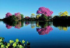 Pantanal Mato-grossense. Brasil  Brazil, Mato Grosso #hoteisdeluxo #boutiquehotels #hoteisboutique #viagem #viagemdeluxo #travel #luxurytravel #turismo #turismodeluxo #instatravel #travel #travelgram #Bitsmag #BitsmagTV   http://bitsmag.com.br/viagem