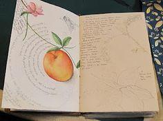 Botanical Illustration classes at the Denver Botanical Gardens