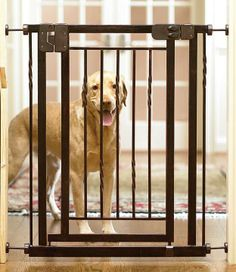 "Designed by Frontgate, our 34""H Expanding Pet Gate provides a contemporary, stylish alternative to plain metal pet gates."