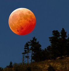 Currently staying up to see the super and blood moon this well morning I suppose. The next opportunity to see this is 2033 so I want to say (when I'm approx 30) that I saw it myself last time. I'm going to tell my students when I start teaching all about it. Please pin all your images of this occasion I would love to see your point of view. God luck, science humbugs!
