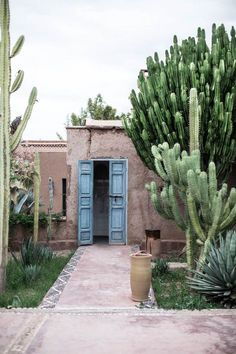 Marrakech cacti magic by Were headed back to Morocco in a few weeks! Were opening up our ORIGIN shop this summer with all of our amazing global finds.