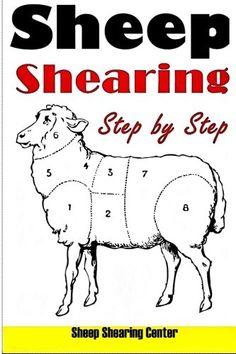 Sheep Shearing: How to shear a sheep step by step with no step skipped - Kindle… Sheep Farm, Sheep And Lamb, Baa Baa Sheep, Sheep Shearing, Future Farms, Goat Farming, Ranch Life, Hobby Farms, Farm Yard