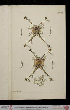 Historia Natvralis Ranarvm Nostrativm in qua omnes earum proprietates / Die natürliche Historie der Frösche hiesigen Landes — Nürnberg, 1758