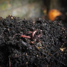 Tout savoir sur le compostage - Je Jardine Le Baobab, Meat, Garden, Composting