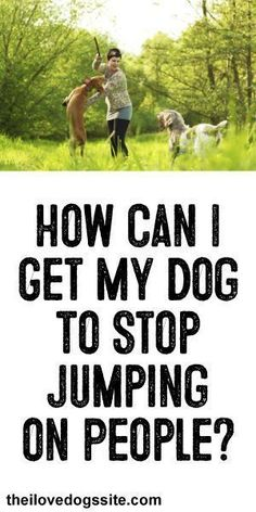 HELP!: How Can I get My Dog To Stop Jumping On People? #BestDogTraining