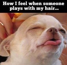 Check out: How I feel. One of our funny daily memes selection. We add new funny memes everyday! Bookmark us today and enjoy some slapstick entertainment! Fotos Do Face, Funny Cute, The Funny, Humor Animal, I Love To Laugh, How I Feel, Just For Laughs, I Smile, Laugh Out Loud