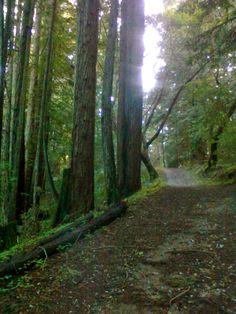 Woods in Santa Cruz, CA