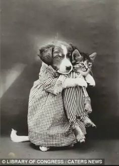 Vintage photo.....wonder why they went to all this trouble to dress their pets up for a photo???
