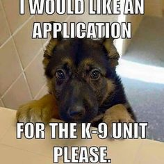 I would like an application for the unit please. Source by tabouncess dog dog memes dog videos videos wallpaper dog memes dog quotes dogs dogs pictures dogs videos puppies puppy video Funny Animal Jokes, Funny Dog Memes, Cute Funny Animals, Funny Animal Pictures, Animal Memes, Cute Baby Animals, Funny Dogs, Funny Kitties, Funny Horses