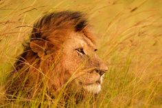 King of the Mara by Stephen Oachs on 500px