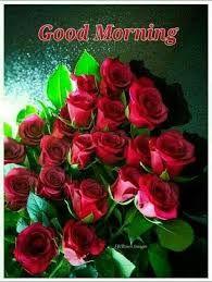 Good Morning Flower Images Hd Download Good Morning Flowers Good Morning Roses Good Morning Images