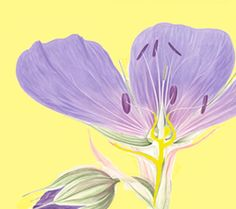 Updated version of Botanical Illustration by Arthur Harry Church, with ...